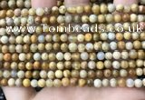 CFC320 15.5 inches 4mm round fossil coral beads wholesale